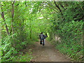 ST5574 : Riverside path in Leigh Woods by Stephen Craven