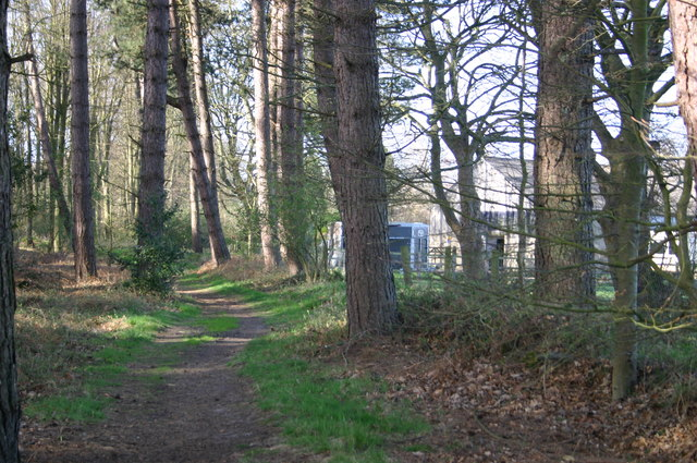 Path in Bodham Wood