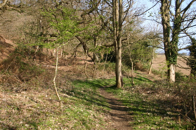 Path off Tolgate Hill