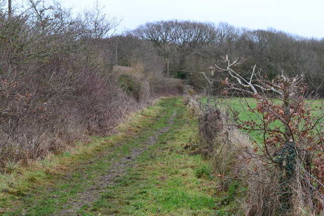Thatchers copse