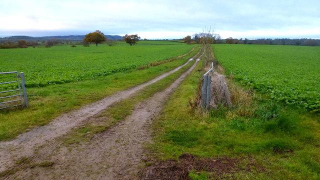 Straight farm track