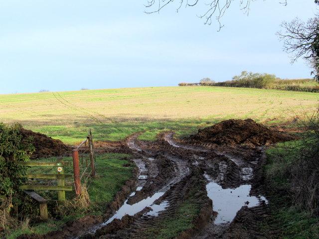 Muddy Entrance to Field Near Oversley Hill Farm