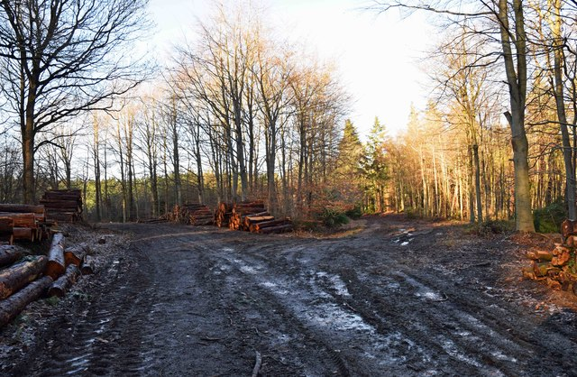 Junction of two forestry tracks, Wyre Forest, nr Buttonoak