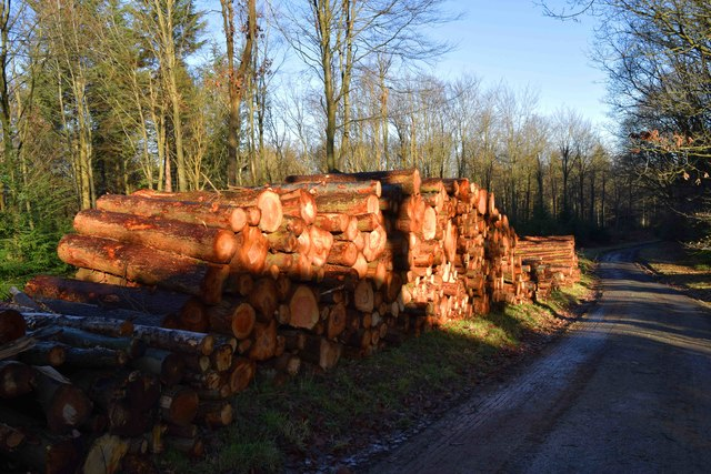 Stacked logs by forestry road, Wyre Forest, nr Buttonoak