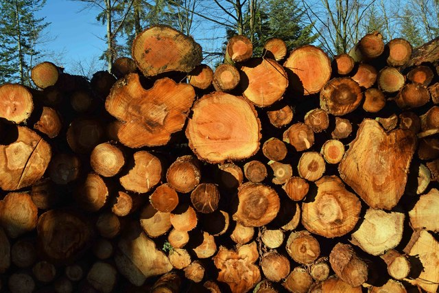 Close view of stacked logs, Wyre Forest, nr Buttonoak