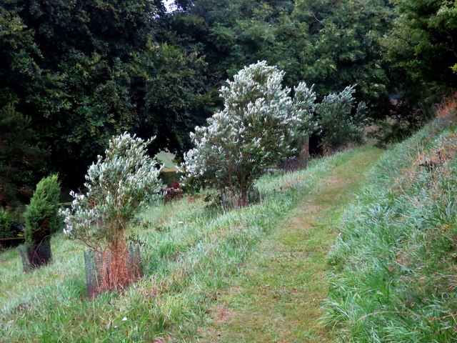 Path by the Olive Grove
