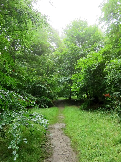 Path through the wood to Mottistone Manor