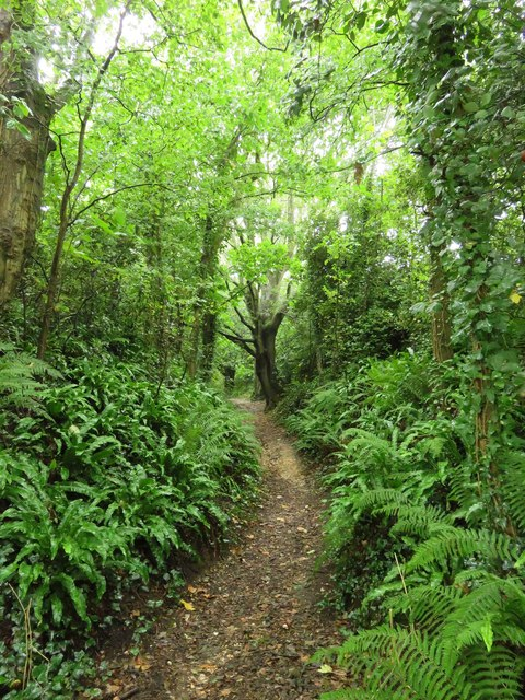 Footpath through the wood to Mottistone Common