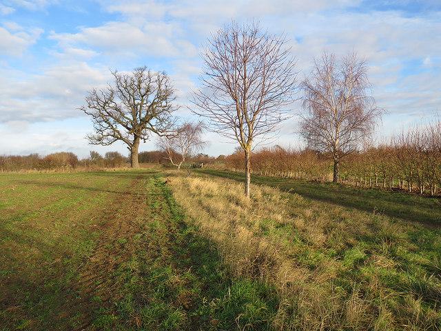 Footpath to Waldringfield