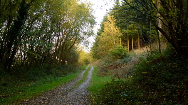 Woodland track, Blackthorn Wood