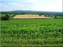 SJ5365 : Maize field and view across the river Gowy valley by Simon Mortimer