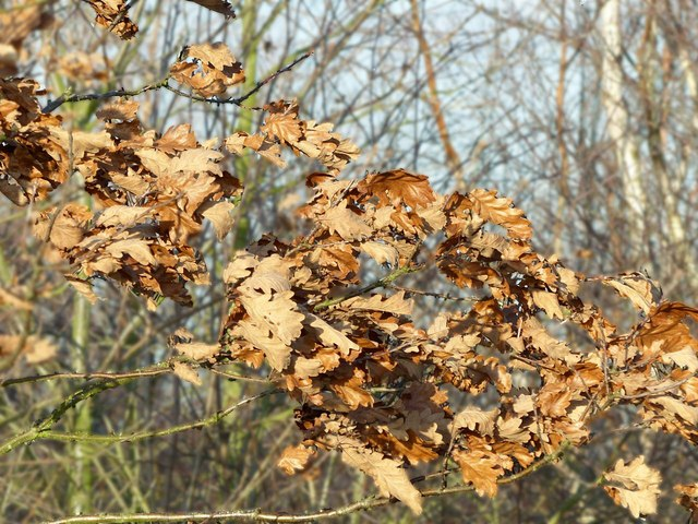 Windswept leaves