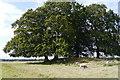 SU1342 : Barrow Amesbury 36, Old King Barrows, King Barrow Ridge by Phil Champion