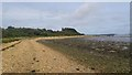 SY9890 : Beach below Ham Common, Poole Harbour by Phil Champion