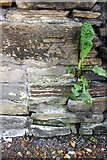SE1537 : Benchmark on Carr Lane wall by Roger Templeman
