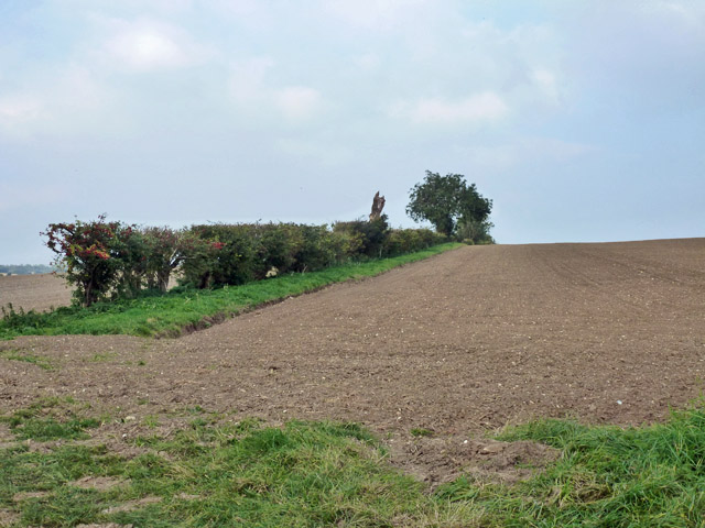 Hedgerow north of Webb's Road