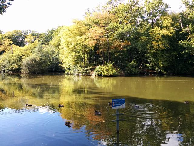 Pond, Goffs Park, Crawley