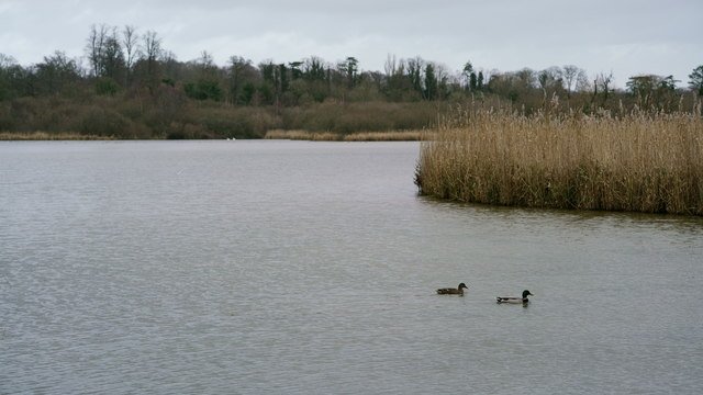 Old Alresford Pond
