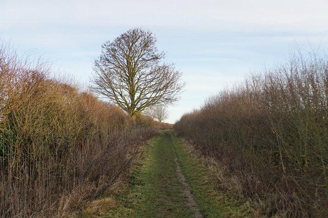 Bridleway to Haddenham