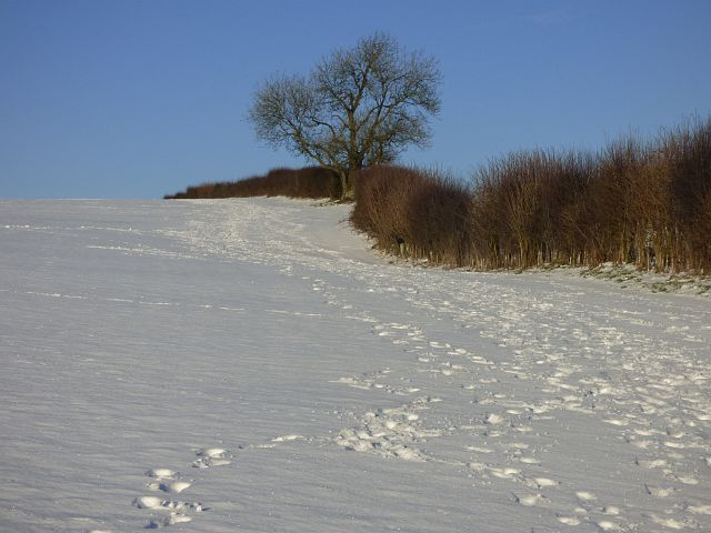 Farmland, Inkpen
