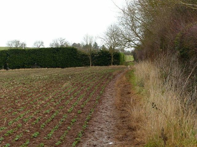 Footpath near Risley