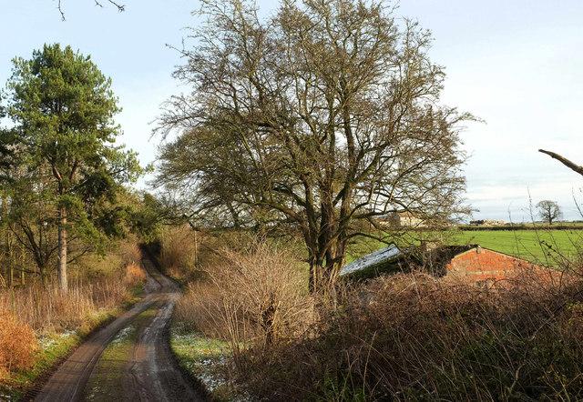 National Byway (Ripon Loop) passing Mackershaw Plantation