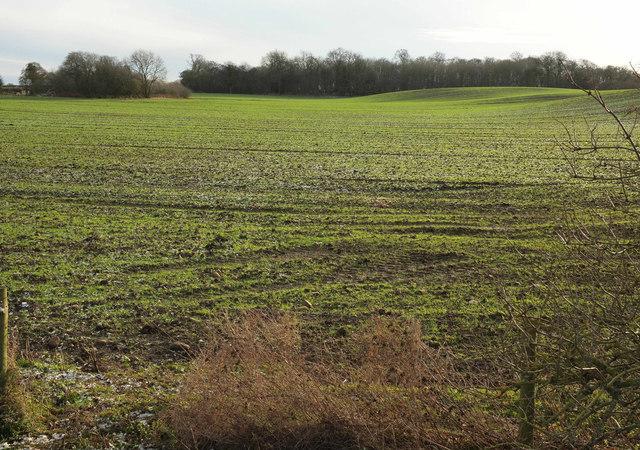 Arable field near Bland Close
