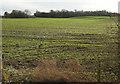 SE2968 : Arable field near Bland Close by Derek Harper