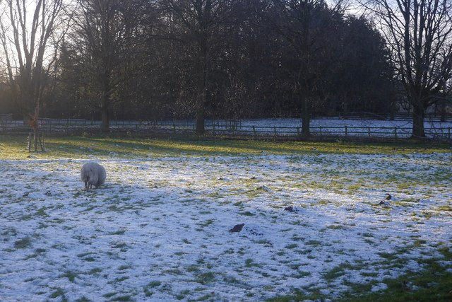 Snow covered field, Purslow