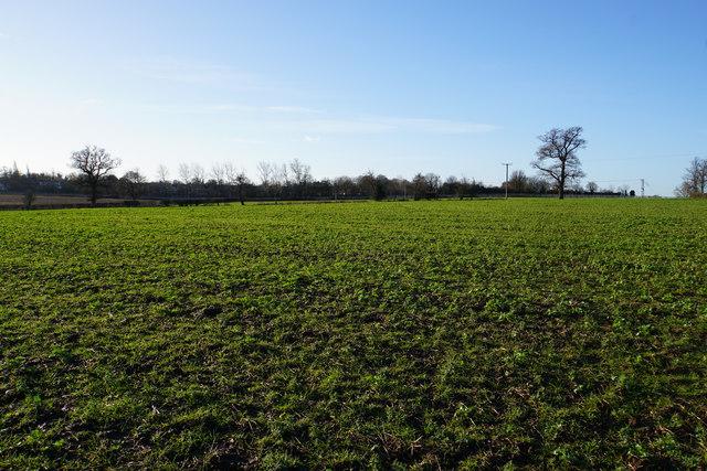Field near Brownsfields Farm