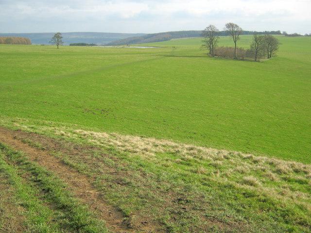 Calton Pastures