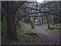 SD4477 : Footpath in Grubbins Wood, Arnside by Karl and Ali