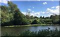 SP2965 : Dead English elms by the Avon, Myton Fields, Warwick by Robin Stott
