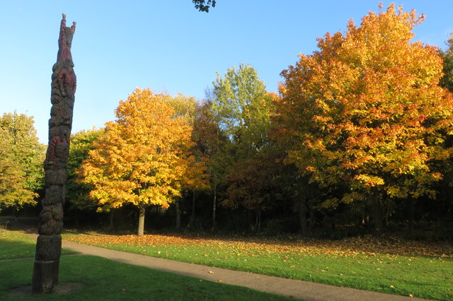 "Autumnal trees by ""Onwards and Upwards"""