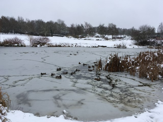 Icy pond in Campbell Park