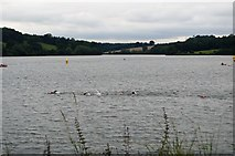 TQ3328 : Openwater swimmers, Ardingly Reservoir by N Chadwick