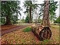 NH5154 : Arboretum on the Brahan Estate by valenta