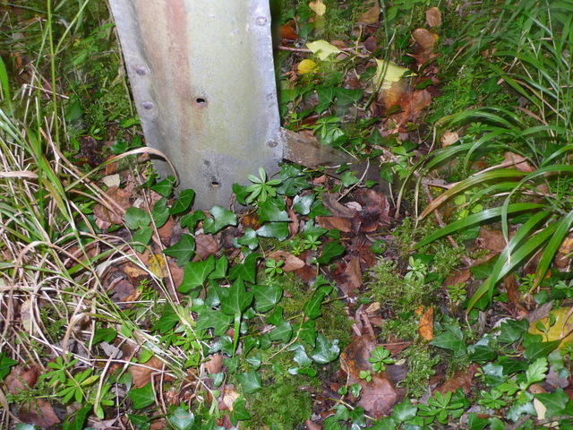 Railway Fencing on Bridport Branch Line (3)