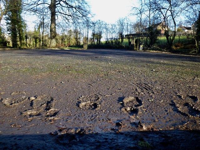 Muddy footprints, Cranny car park