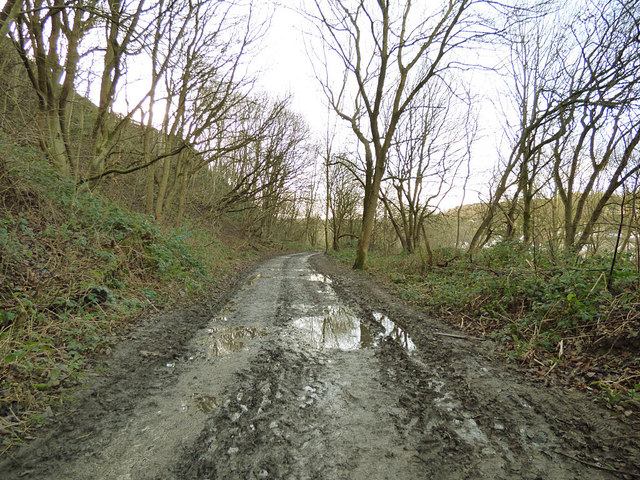 Muddy track in Post Hill woods