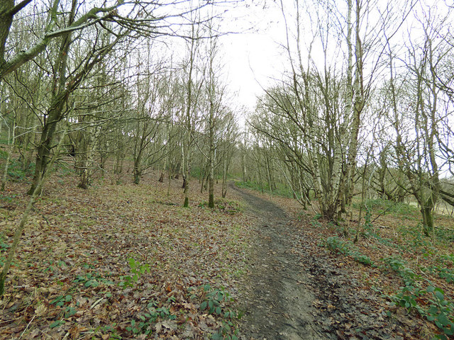 Footpath in Post Hill woods