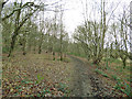 SE2433 : Footpath in Post Hill woods by Stephen Craven