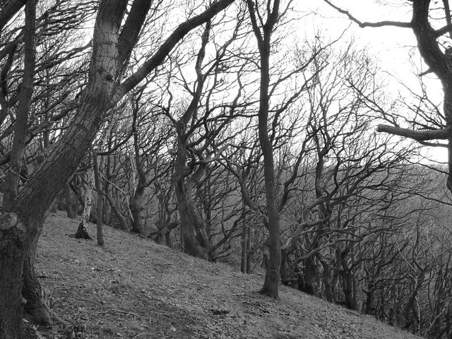 Post Hill woods