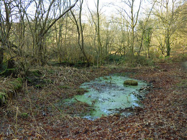 Stagnant pond in Post Hill woods