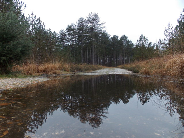 Wareham: a forest reflection