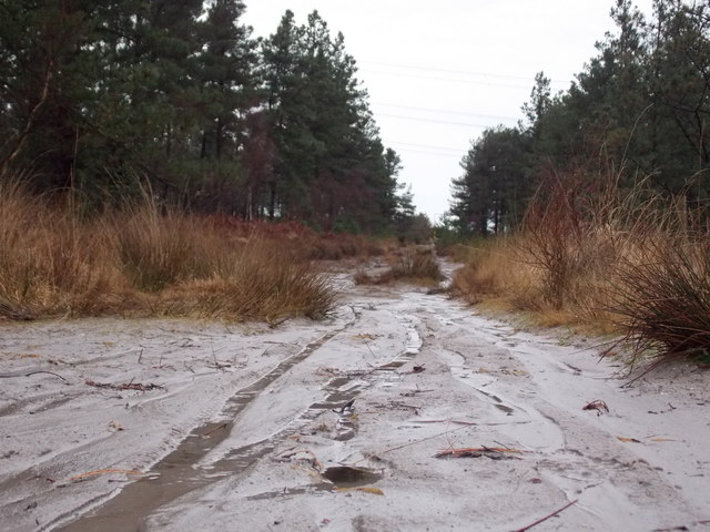 Wareham: cycle tracks on a sandy bit of bridleway