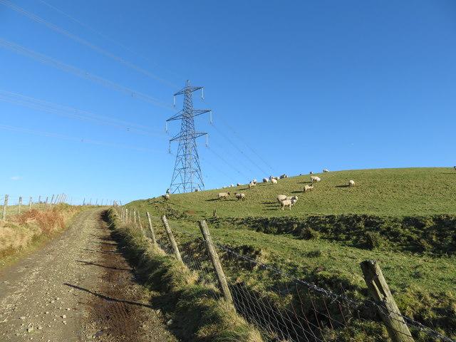 Track on Mynydd Portref