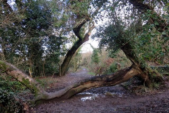 Wish tree in Broom Wood