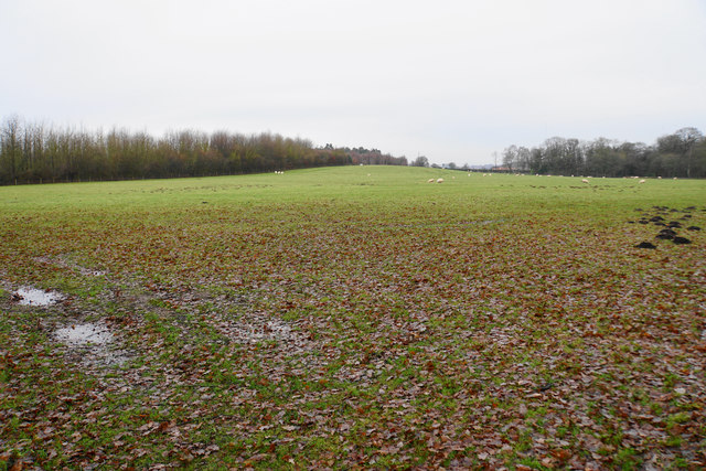 Sheep grazing land in the Canwell Estate