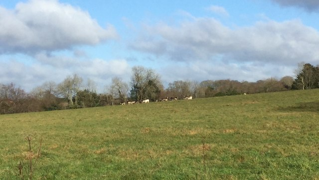 Deer in fields near Selsfield
